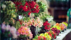 melbourne international flower u0026 garden show 2014 aroundyou
