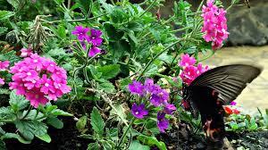 nature flowers butterflies wallpaper 1920x1080 199395