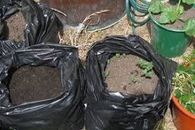Container Gardening Potatoes - container gardening growing potatoes in any climate five spot