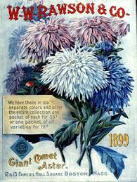 vintage seed packets some like it pretty pretty vintage seed packets and more