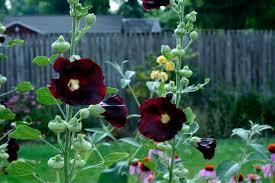 flower vibrant summer colors summertime flowers wallpaper for