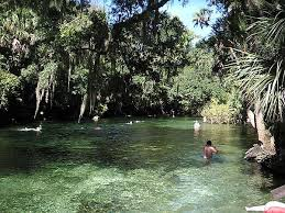 Florida wild swimming images Florida springs where you can swim snorkel and dive florida rambler jpg