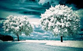 winter landscape wallpaper background download background images