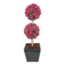 topiary trees decorative topiary trees for curb appeal hooks lattice