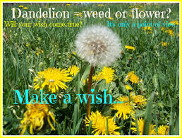 free facebook header spring images and a dandelion make a wish