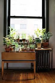 Window Sill Garden Inspiration The Gardener Indoor Window Garden Inspiration Plants