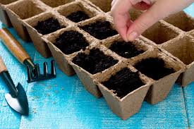 Vegetable Garden Preparation by The Benefits Of Using Seeds When Growing A Vegetable Garden Indoors
