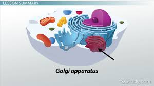the cell structure u0026 function video u0026 lesson transcript study com