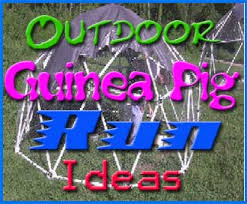 Guinea Pig Hutches And Runs For Sale Outdoor Guinea Pig Run Ideas Abyssinian Guinea Pig Tips