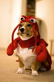 Halloween Costumes Dogs Cutest Puppy Costumes 2011 Costume Cute Tiny