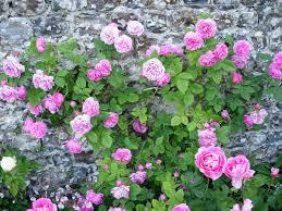 chambres d hotes veules les roses chambre d hôtes de charme moulin des cressonnières ref g21063 à