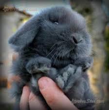 gabbie per conigli nani usate coniglio nano ariete regalo amanti animali cerca compra vendi