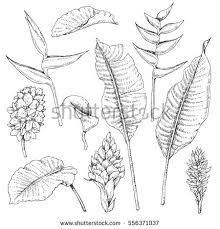jungle sketch stock images royalty free images u0026 vectors