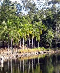 Brisbane City Botanic Gardens by Brisbane U0027s Best Park U0026 Gardens Brisbane