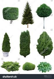 set trees shrubs set various evergreen stock photo 335292356