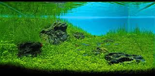 Aquascaping Freshwater Aquarium Manage Your Freshwater Aquarium Tropical Fishes And Plants