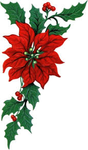 christmas flowers graphic christmas flowers picgifs
