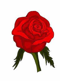 realistic rose drawing in color urldircom