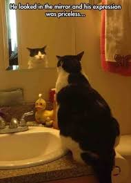 Looking In The Mirror Meme - funny animal pictures cat memes just like cat funniest animals