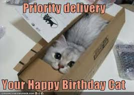Cat Birthday Memes - priority delivery your happy birthday cat cheezburger funny