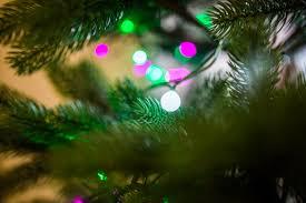 tree lights bokeh free stock photo negativespace