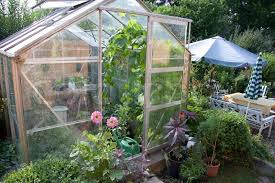 greenhouse full of flowers and green plants stock photo colourbox
