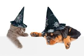 background picture halloween picture animals puppy kittens rottweiler dogs cats hat halloween