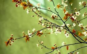 spring flowers wallpapers hd pixelstalk net