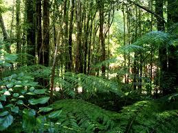 Plants In The Tropical Rain Forest - valdivian temperate rain forest wikipedia