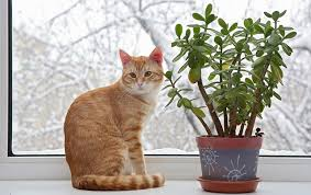 common indoor plants that are poisonous to dogs and cats