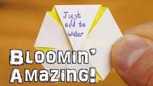 What Is Orange Flower Water - just add water blooming flower trick youtube