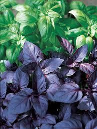 Eggplant In Container Garden How To Grow A Vertical Vegetable Garden How Tos Diy