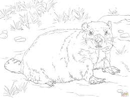 download coloring pages groundhog coloring pages groundhog