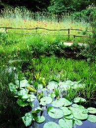 25 backyard pond designs outdoor designs design trends