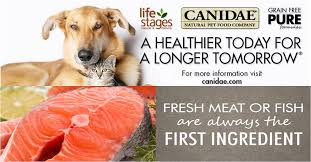 could pet food be causing your pet u0027s problems