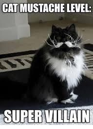 21 Of The Best Grumpy - super funny grumpy cat memes the best cat 2018