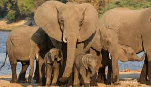 elephants without borders archive an elephant family stands