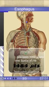 Abdominal Anatomy Quiz Speed Anatomy Lite Quiz On The App Store