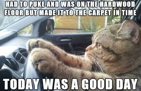 Today Was A Good Day Meme - today was a good day cat weknowmemes