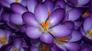 flower wallpapers for your desktop