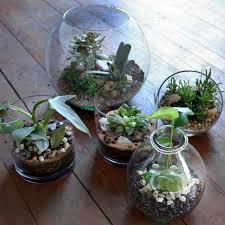 terrarium care how to care for terrariums with succulents cacti