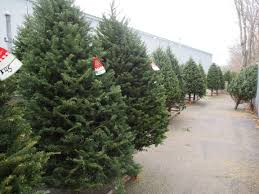 christmas trees ferestien feed u0026 farm supply