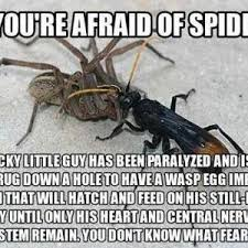 Afraid Of Spiders Meme - so you re afraid of spiders by arcesusonyoutube meme center