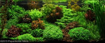 Most Beautiful Aquascapes Wonderful Inspiration Aquascape Aquarium Charming Decoration