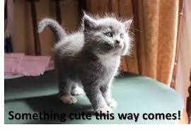 Cute Kittens Meme - kitten meme 11 love cute kittens puppy litle pups