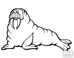 coloring page for walrus walrus coloring page large size of walrus coloring page with
