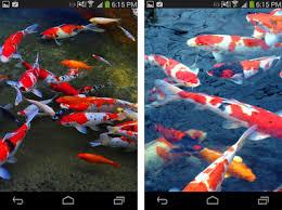 koi live wallpaper version apk free koi live wallpaper free apk version 1 1