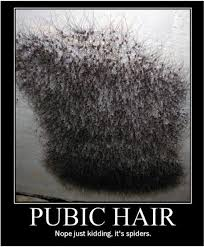 ver large pubic hair 18 best bizarre images on pinterest chistes funny humor and