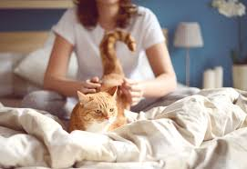 pros and cons of the new fiv vaccine for cats aggressive treatment for fiv in a senior cat