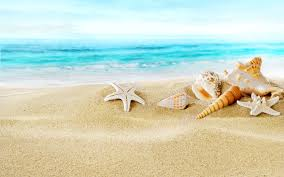 images of sea shell wallpaper 1920x1080 sc